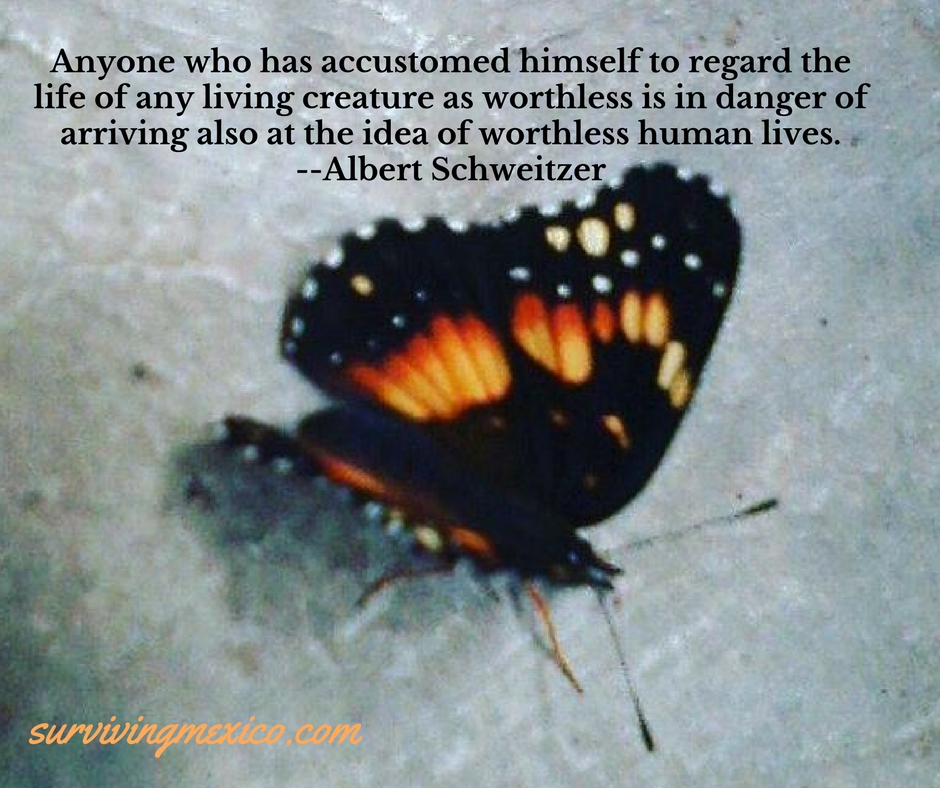 Anyone who has accustomed himself to regard the life of any living creature as worthless is in danger of arriving also at the idea of worthless human lives. --Albert Schweitzer