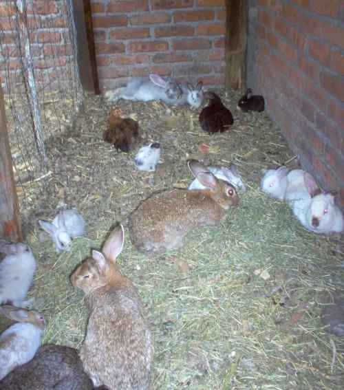 breeding like rabbits
