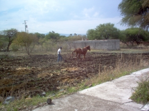 My husband with Red preparing the field for planting.