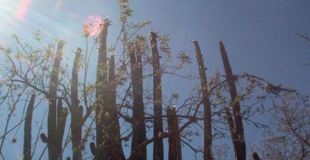 Fruits Native To Mexico Surviving Mexico