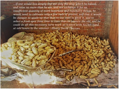 live-simply-corn