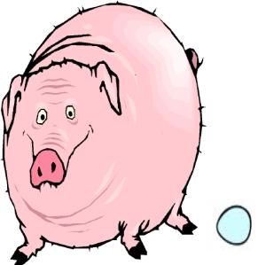 pig laying egg