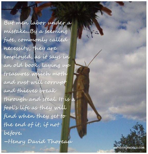 thoreau-grasshopped