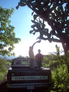 Climbing on the top of the truck might get you close enough to harvest tunas--or it might not.
