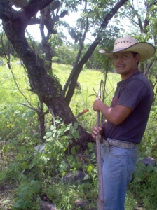Attaching a long stick to a machete may help you harvest.