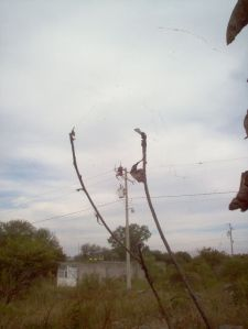 Watch out for the spiders in La Yacata!