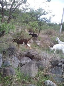 Everybody enjoys grazing time!