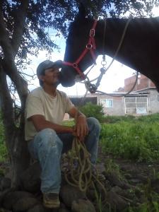 kissing horse