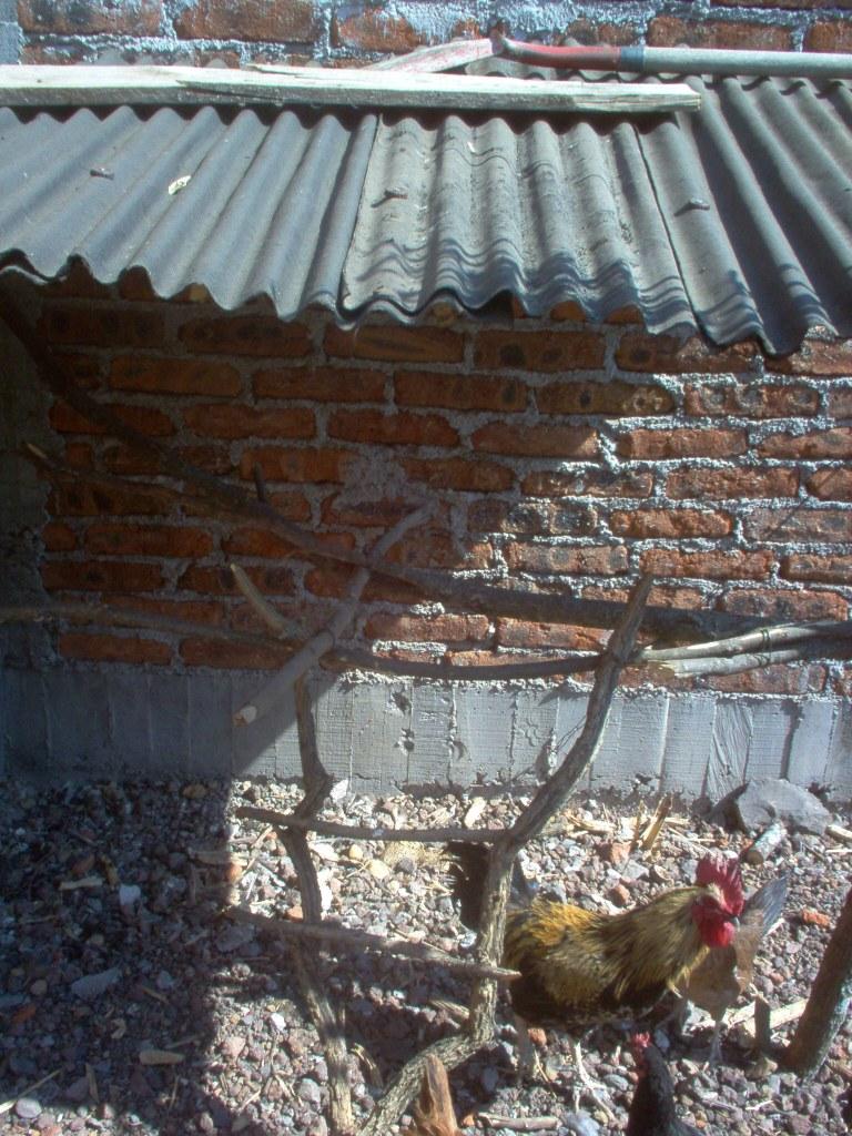 chicken swing
