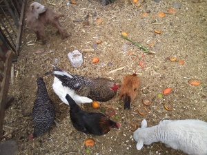 Multi-racial chickens