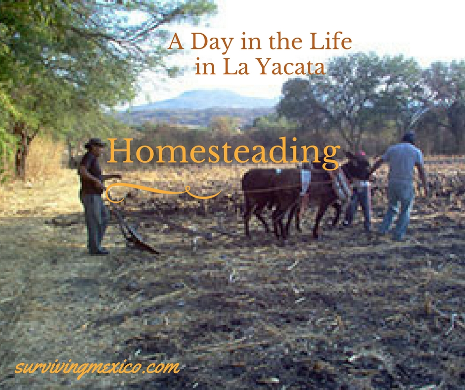 A Day in the Life in La Yacata  bf5da8eb209