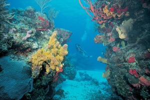 The reef system is home to more than 65 species of stony coral, 350 species of mollusk and more than 500 species of fish.