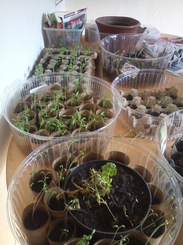 seed starters