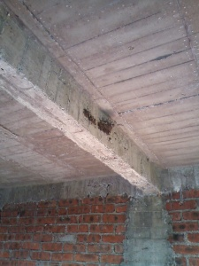 The barn swallows made their nest on the beam of our recently finished second floor.