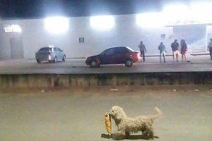 Max the little looter brings some levity Dog joins supermarket looters in Chetumal but is rewarded for his crime