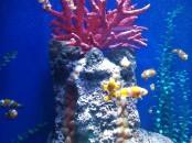 Nemo is found!