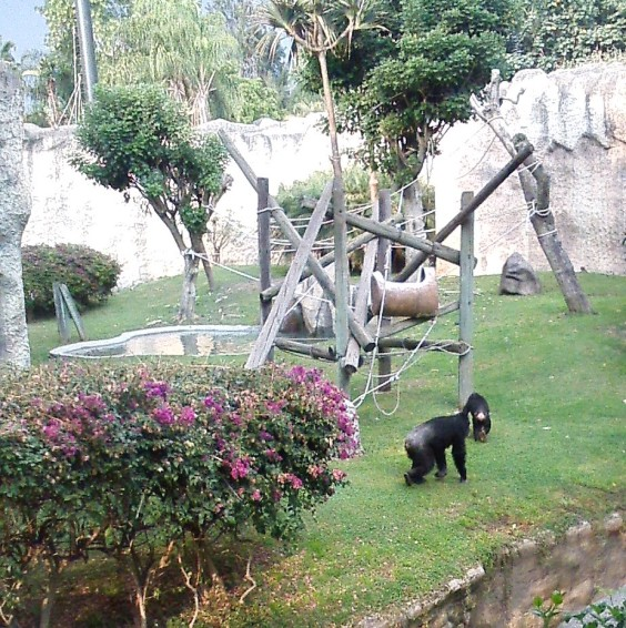 Chimpanzee and young