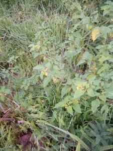 Edible Plants In Mexico Surviving Mexico