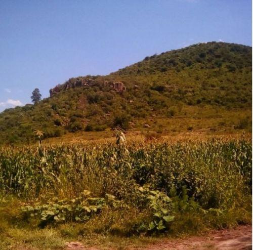 alligator mountain