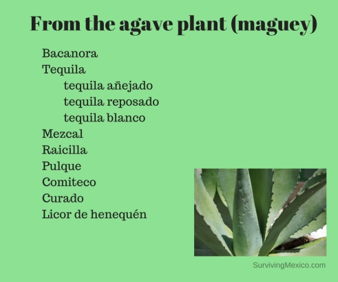 From the agave plant (maguey)