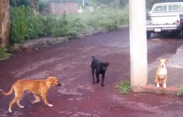 Black Alpha dog on alert